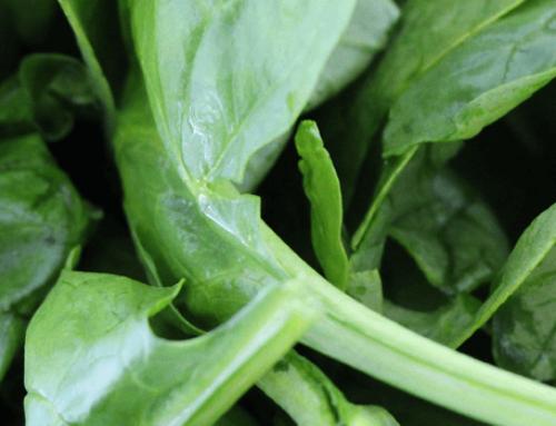 Gefüllte Zucchini mit Ricotta und Spinat | flexibles Weight Watchers Rezept für die ganze Familie